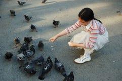 Pombos de alimentação da menina fotografia de stock royalty free