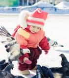 Pombos de alimentação da menina com mãos Foto de Stock
