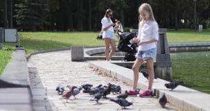 Pombos de alimentação da menina loura bonito no lago em um parque vídeos de arquivo