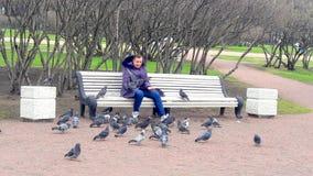 Pombos de alimentação no parque foto de stock