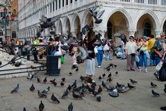 Pombos de alimentação Veneza Itália fotografia de stock