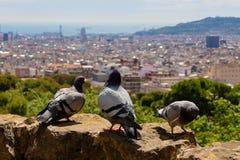 Pombos de competência da velocidade observando a paisagem da cidade de Barcelona - imagem foto de stock royalty free