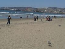 Pombos de voo gaivota e pelicanos acima do céu azul das ondas nebulosas do mar de Ensenada da praia da esplanada do quebra-mar do Imagens de Stock
