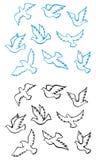 Pombos e pássaros das pombas Fotos de Stock Royalty Free