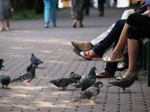 Pombos e pés Foto de Stock Royalty Free