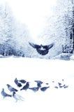 Pombos e pardais na cidade do inverno Fotos de Stock