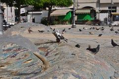 Pombos em Chipre Imagem de Stock