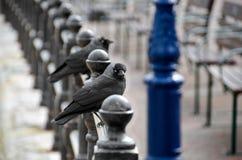 Pombos em polos fotografia de stock