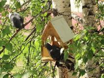 Pombos em torno dos alimentadores do pássaro vídeos de arquivo