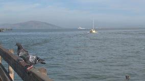 pombos em um cais em San Francisco filme