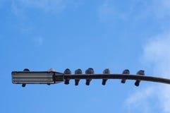 Pombos em um cargo da lâmpada fotos de stock