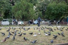 Pombos em um parque imagem de stock