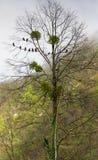 Pombos em uma árvore Fotografia de Stock