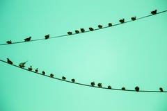 Pombos empoleirados no fio Fotografia de Stock Royalty Free