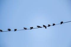 Pombos empoleirados no fio Fotos de Stock Royalty Free