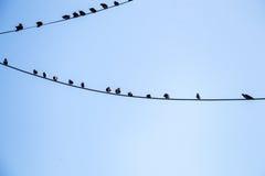 Pombos empoleirados no fio Imagens de Stock