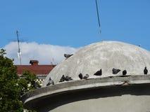 Pombos na abóbada da construção imagens de stock