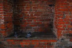 Pombos na brecha da parede de tijolo Foto de Stock Royalty Free