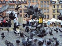 Pombos na cidade velha de Varsóvia, Polônia fotografia de stock