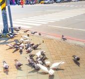 Pombos na estrada no dia imagens de stock