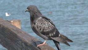 pombos no cais San Francisco filme