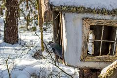 Pombos no inverno na calha de alimentação no parque imagens de stock