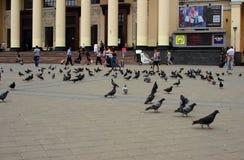 Pombos no quadrado da estação, Kharkov, Ucrânia, o 13 de julho de 2014 Imagens de Stock Royalty Free