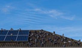 Pombos no telhado Imagem de Stock