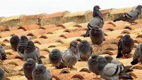 Pombos no telhado - - a Andaluzia Fotos de Stock