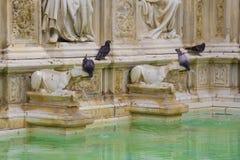 Pombos que bebem de uma fonte de Siena Fotografia de Stock Royalty Free