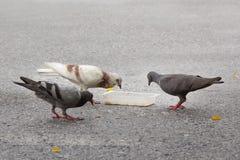 Pombos que comem o alimento em uma rua Fotografia de Stock Royalty Free