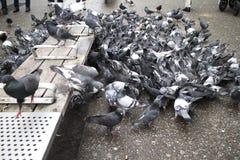 Pombos que recolhem em torno do banco do centro Fotografia de Stock