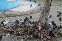 Pombos sob uma árvore foto de stock