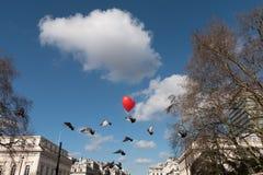 Pombos vermelhos do balão e do voo do coração imagens de stock royalty free