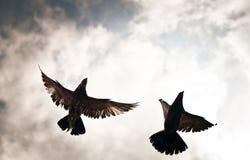 Pombos vistos de baixo de Imagem de Stock