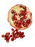 pomegranate зрелый Стоковые Изображения