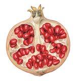 pomegranate части Стоковая Фотография