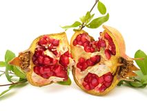 Pomegranate. The pomegranate (Punica granatum) is a fruit-bearing deciduous shrub or small tree growing to 5–8 m tall. In the functional food industry stock photo