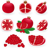 Pomegranate stock illustration