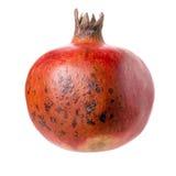 Pomegranate. Stock Photo