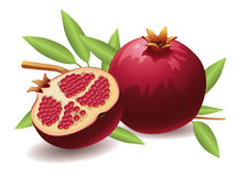 Pomegranate. Realistic vector illustration of a pomegranate and a half pomegranate Stock Images