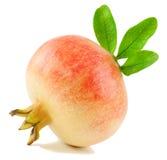 Pomegranate Stock Images