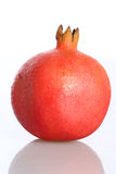 Pomegranate. The Pomegranate (Punica granatum) is a fruit-bearing deciduous shrub or small tree growing to 5–8 m tall. The pomegranate is native from Iran to Royalty Free Stock Photo