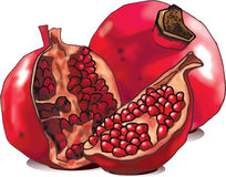 Pomegranate. Whole and open-face with seeds Royalty Free Stock Images