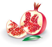 Pomegranate illustration. Very detailed vector illustration for best print Royalty Free Stock Images