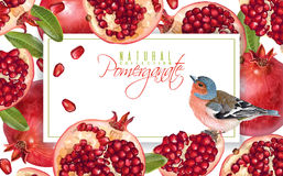 Pomegranate bird horizontal banner. Vector horizontal banner with pomegranate fruits and bird on white background. Design for cosmetics, spa, pomegranate juice Royalty Free Stock Photo