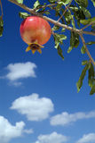 Pomegranate on branch. Against cloudy blue sky Royalty Free Stock Photography