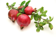 Pomegranate with branch Stock Photo