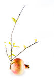 Pomegranate and branch with yellow leaves isolated Stock Photo
