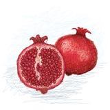 Pomegranate cross section Royalty Free Stock Photo